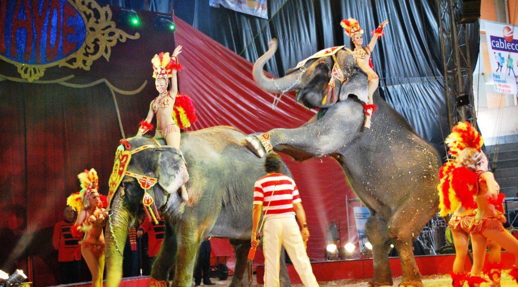 Elephant3AtaydeFeria09